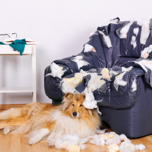 Dog destroyed leather chair